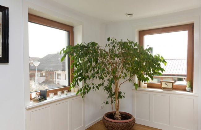 Holzfenster innen gebeizt und gebürstet